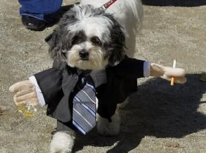 chien-deguisement-costume