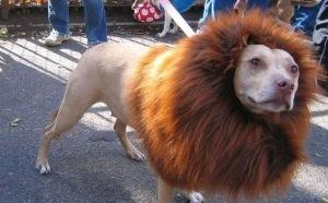 COSTUME-CHIEN-LION