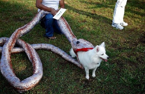 D guisement 11heuresmoinslequart - Deguisement halloween chien ...